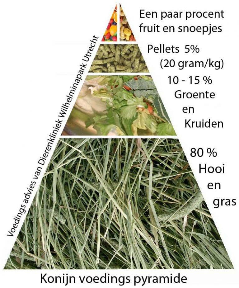 voedings pyramide konijn