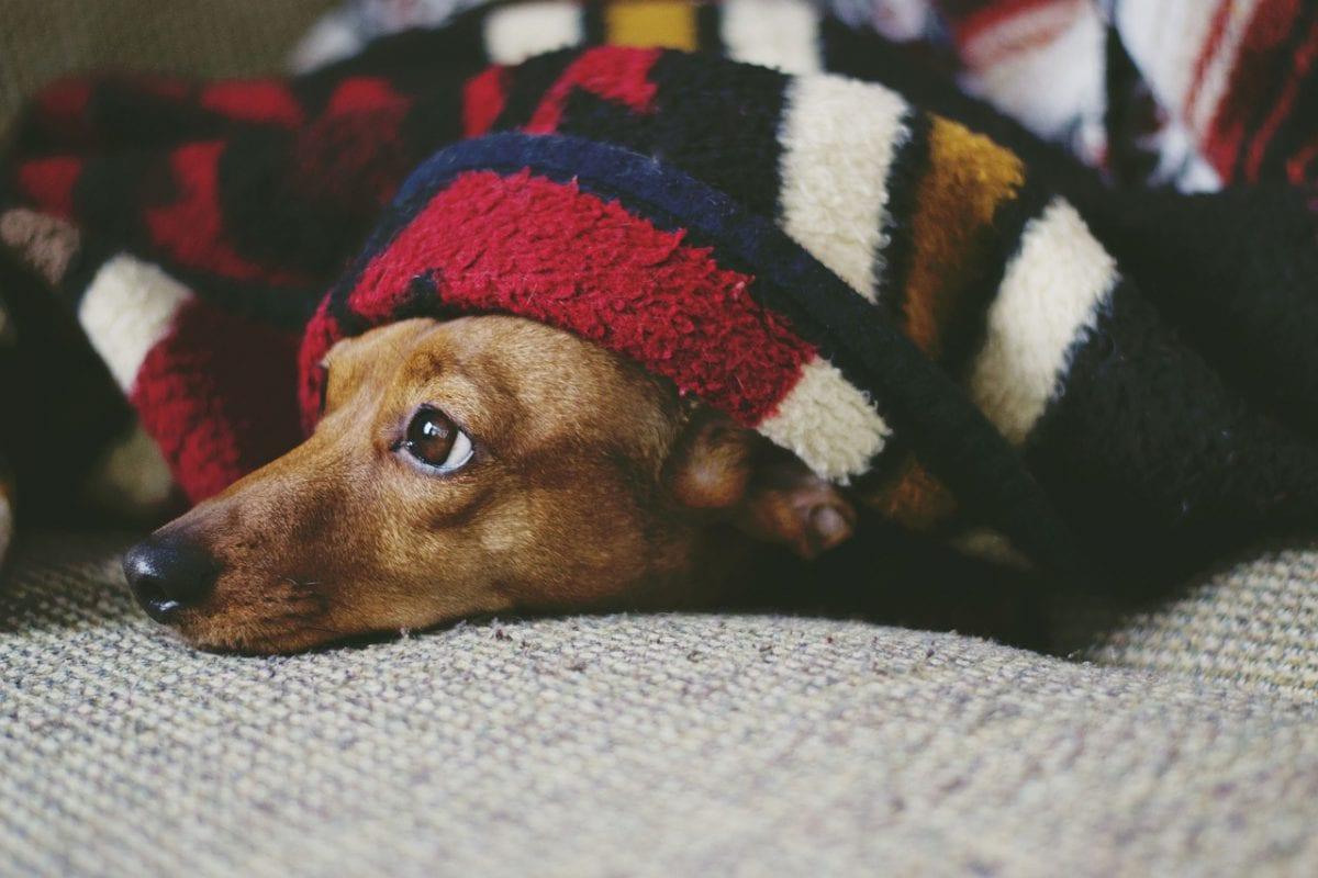 hond spoed