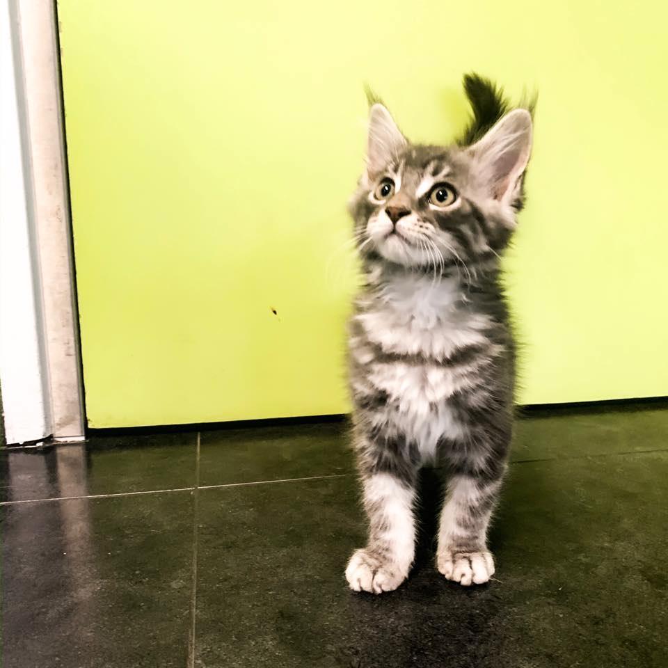 kitten groen