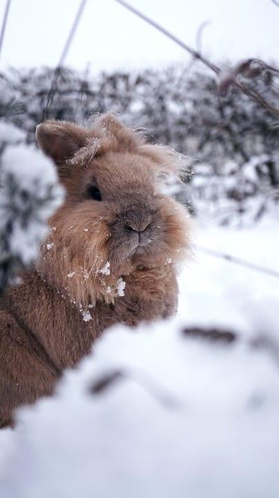 konijn sneeuw
